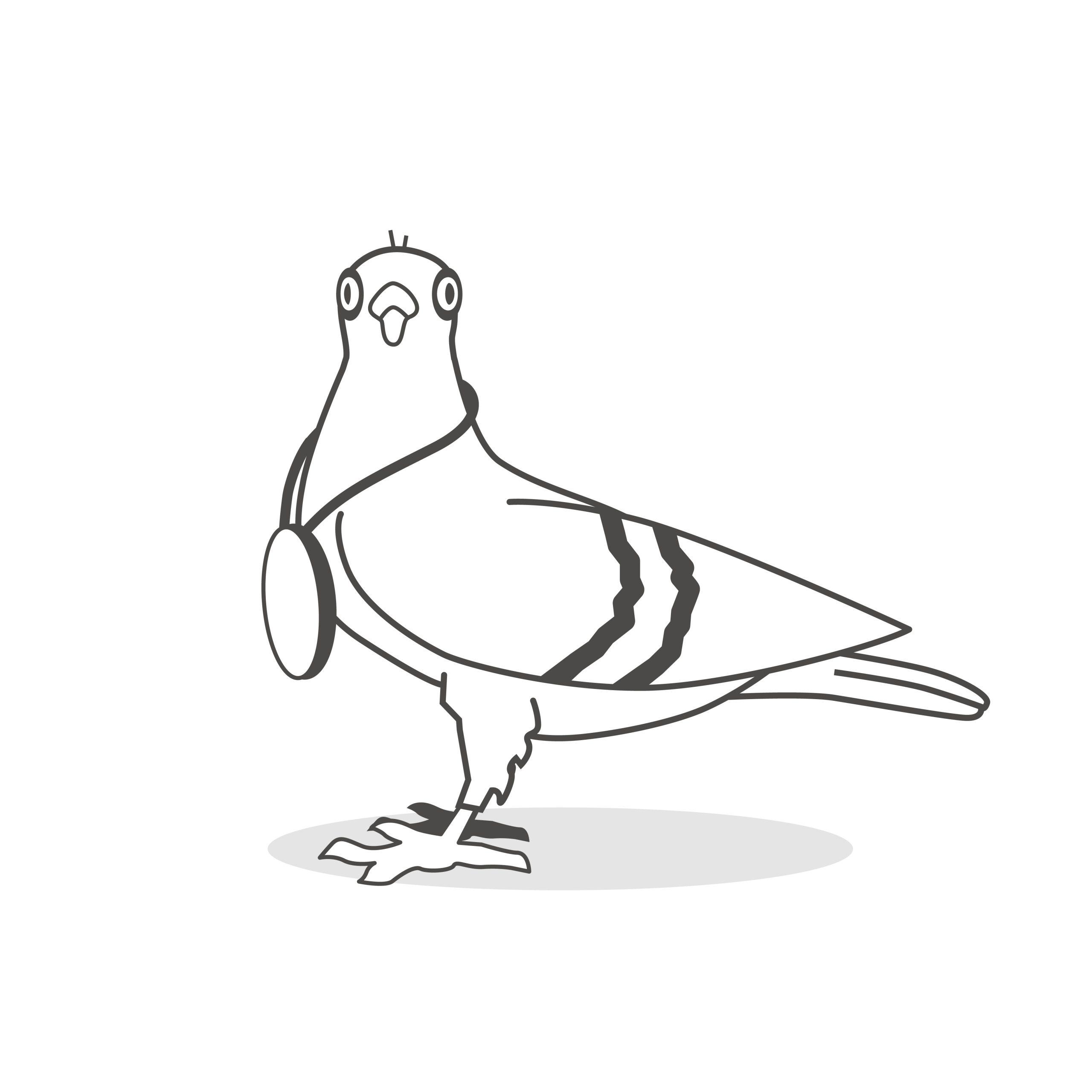Pigeon Center Duif